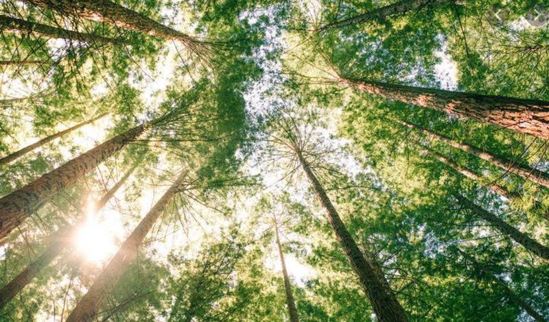 The Best ESG ETFs